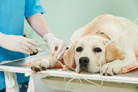 Отзывы о клинике кот и пес в калуге
