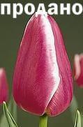 цветы оптом новосибирск