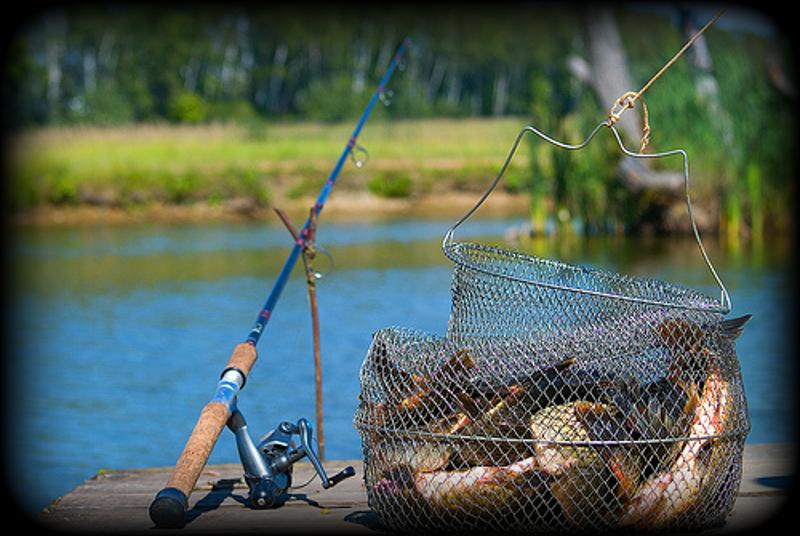 где можно ловить рыбу в киеве во время запрета