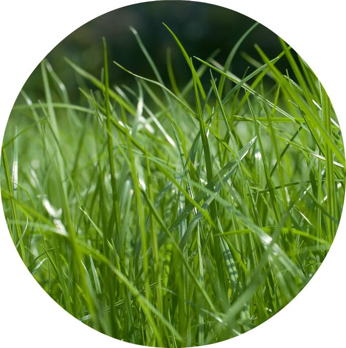 Образец зеленого газона