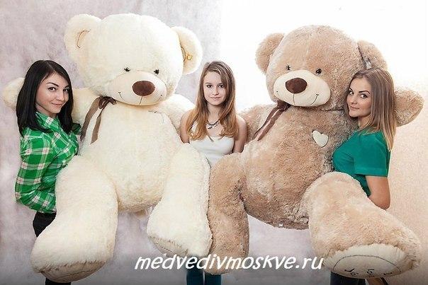 большие красивые медведи