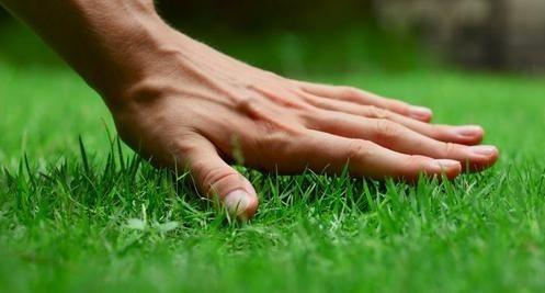 Устройство зеленого газона, с применением гербицидов