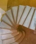 монолитная лестница с поворотом