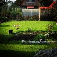 Зеленая лужайка на дачном участке